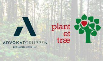 Plant et træ Advokatgruppen testamente advokater
